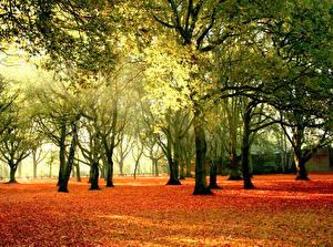 Обои Осень Деревья Листья