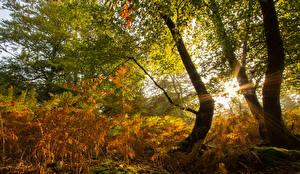 Фотографии Осенние Деревья Лучи света Природа
