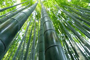 Фотография Бамбук Крупным планом Вид снизу Природа