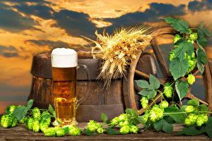 Картинки Пиво Бочка Хмель Кружке Пеной Колосья Пища
