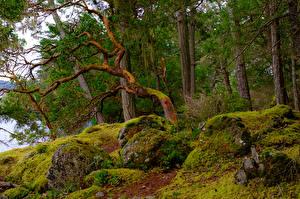 Обои Канада Леса Камень Мох Деревья East Sooke Park