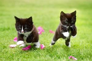 Фото Кот В прыжке Трава Котят 2 Черная животное