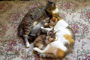 Обои Коты Котята