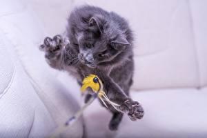 Обои Коты Игрушки Прыжок Лапы