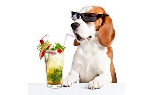 Обои Собака Коктейль Очки Бигля Стакан Белым фоном Смешной