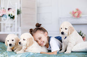 Фото Собаки Девочки Улыбка Ретривер Щенок Ребёнок Животные