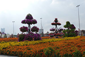 Обои Дубай Сады Бархатцы Дизайн Miracle Garden Природа
