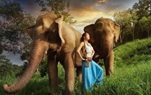 Фото Слоны Азиаты Девушки Животные