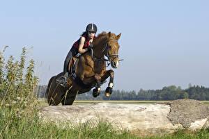 Картинка Верховая езда Лошади Прыжок спортивный Девушки