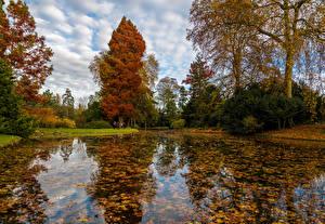 Фотографии Франция Осенние Парк Пруд Деревьев Листья Chatenay-Malabry Природа