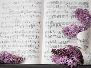 Картинки Ноты Сирень Цветы