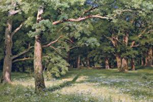 Фотографии Картина Деревья Ivan Shishkin, The Forest Clearing Природа