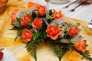 Картинка Розы Оранжевый Цветы