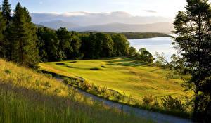 Фотографии Шотландия Леса Поля Loch Lomond Природа