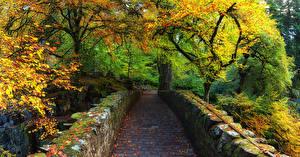 Фото Шотландия Парки Осень Мосты Деревья Мох Dunkeld Perthshire Природа