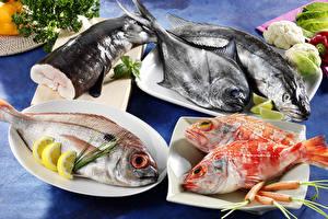 Фотографии Морепродукты Рыба Лимоны Морковь Тарелка