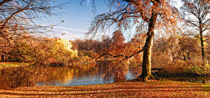 Фотографии Сезон года Осень Пруд Деревья Листва
