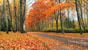 Картинка Времена года Осенние Дороги Деревья Листья Природа