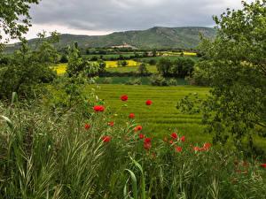 Картинка Испания Луга Маки Холмы Трава Кусты Catalonia