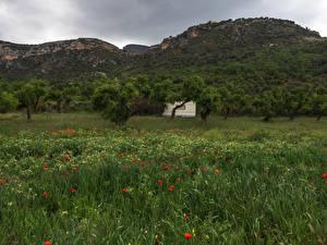 Фото Испания Горы Деревья Трава Catalonia