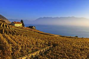 Фотографии Швейцария Поля Осенние Lavaux region