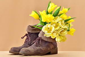 Картинки Тюльпаны Ботинки Цветы