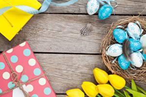 Фотографии Тюльпаны Яйца Гнездо Доски