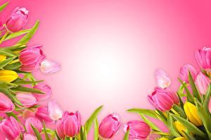 Картинка Тюльпаны Шаблон поздравительной открытки