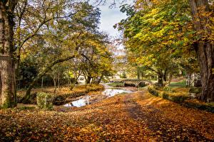 Фотография Великобритания Парки Осенние Пруд Листва Деревья Wycoller Country Park Lancashire