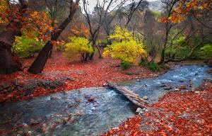 Картинка Осенние Мосты Ручей Природа