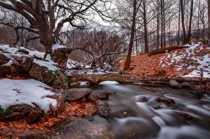 Картинки Осенние Леса Ручей Деревья Природа