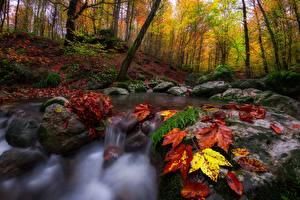 Фотографии Осенние Камень Леса Ручей Листва Природа