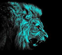 Фотография Большие кошки Львы Рисованные Клыки Голова Злость Черный фон Животные