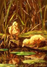Картинка Птицы Пруд Утки Детеныши Рисованные Птенцы Животные