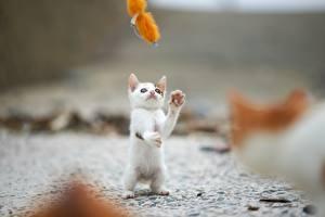 Фото Коты Котята Животные