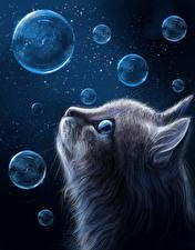 Фотография Кошки Рисованные Голова Мыльные пузыри Животные