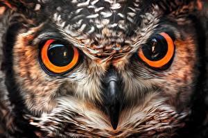Обои Крупным планом Глаза Совы Клюв Животные