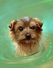 Обои Собаки Вода Рисованные Животные картинки