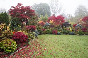 Картинки Англия Сады Осень Газон Кустов Walsall Garden Природа