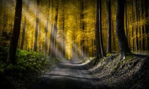 Фото Леса Дороги Деревья Лучи света Природа