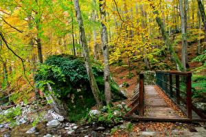 Фотография Франция Леса Мосты Осенние Деревья Мох Corsica