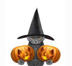 Фотография Праздники Хеллоуин Коты Тыква Белый фон Шляпа Смотрит Животные