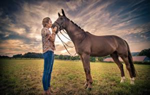 Фотография Лошади Поля Девушки Животные