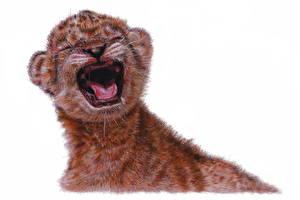 Фото Львы Большие кошки Детеныши Рисованные Белый фон Животные