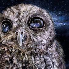 Фото Совообразные Рисованные Вблизи Глаза Клюв Kosmos eyes животное