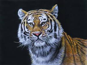 Фотография Рисованные Большие кошки Тигры Смотрят Голова Черный фон Усы Вибриссы животное