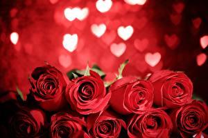 Обои Розы Красный
