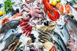 Картинка Морепродукты Рыба Раки Креветки Лед Продукты питания