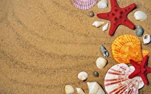 Картинка Ракушки Морские звезды Песок