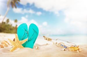 Фото Морские звезды Вьетнамки Песок Бутылка Пляж